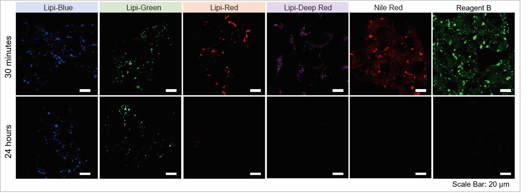 High Intracellular Retentivity of Lipid Droplet Detection Probes